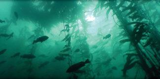 canada marine protection