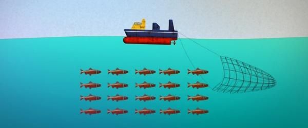 farming fish