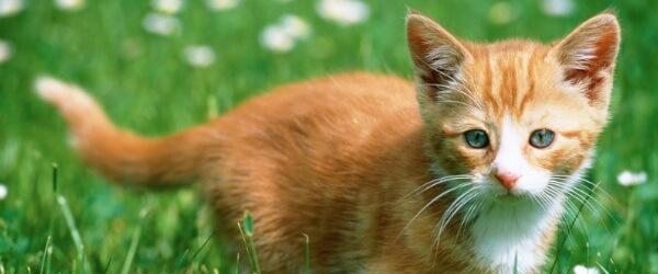 Kitty CATastrophe: How your feline impacts on biodiversity