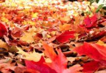 fall winterization