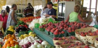 Eco Living at Farmer's Market