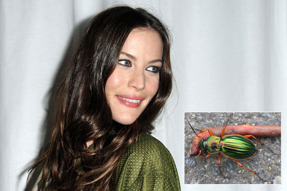 Liv Tyler Beetle