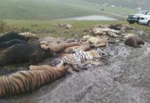 Muskingum County Ohio Animal Farm Killings