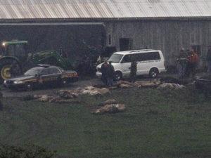 Muskingum County Animal Farm Killings