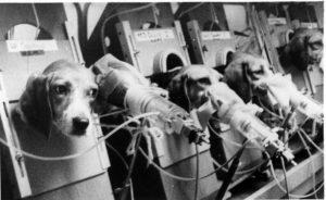 Beagles smoking for animal testing