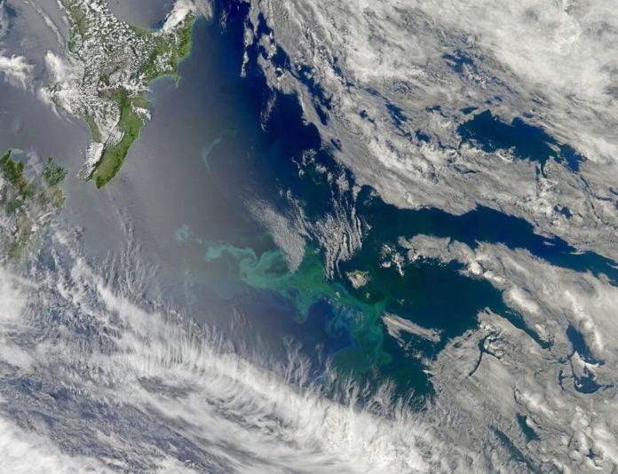Bloom of Ocean Plant Life