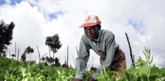 Climate Change endangers food