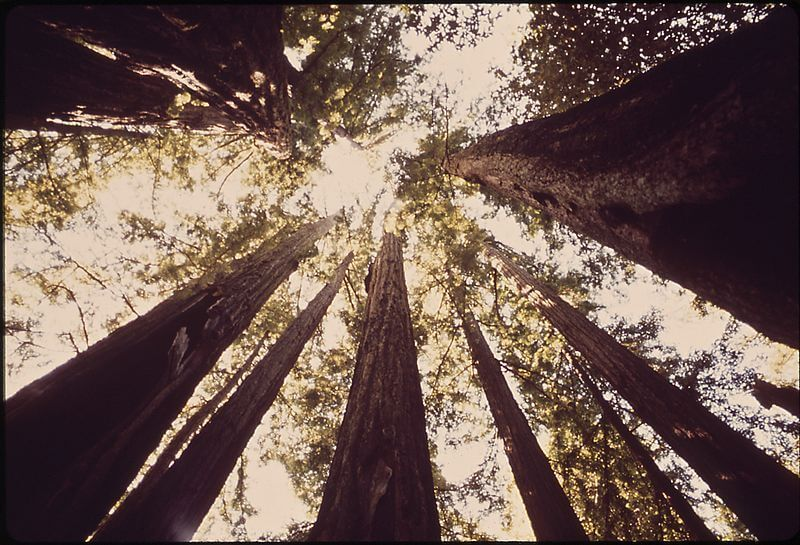 Big Basin Redwood State Park, California. image from the Digital Journal.