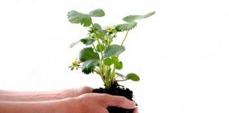 improve soil when growing veggies
