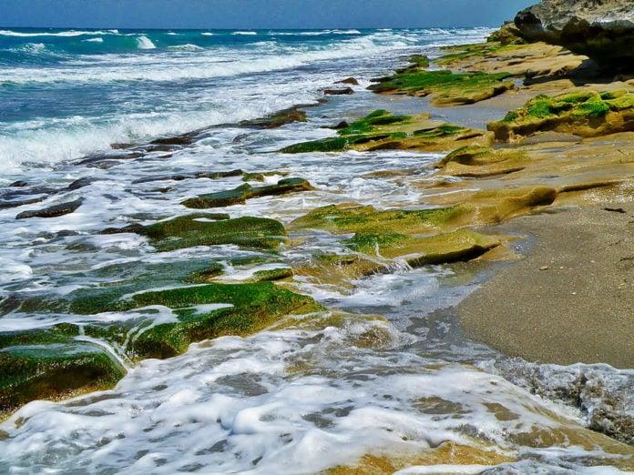 algae in the ocean