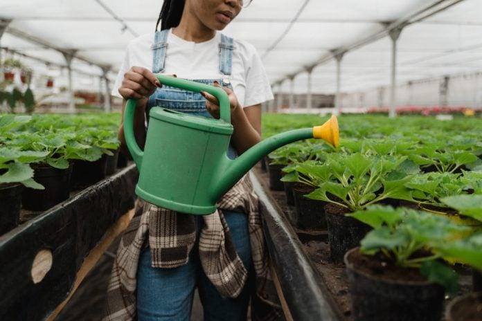 Garden Using Less Water