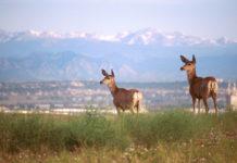 Rocky Mountain Arsenal