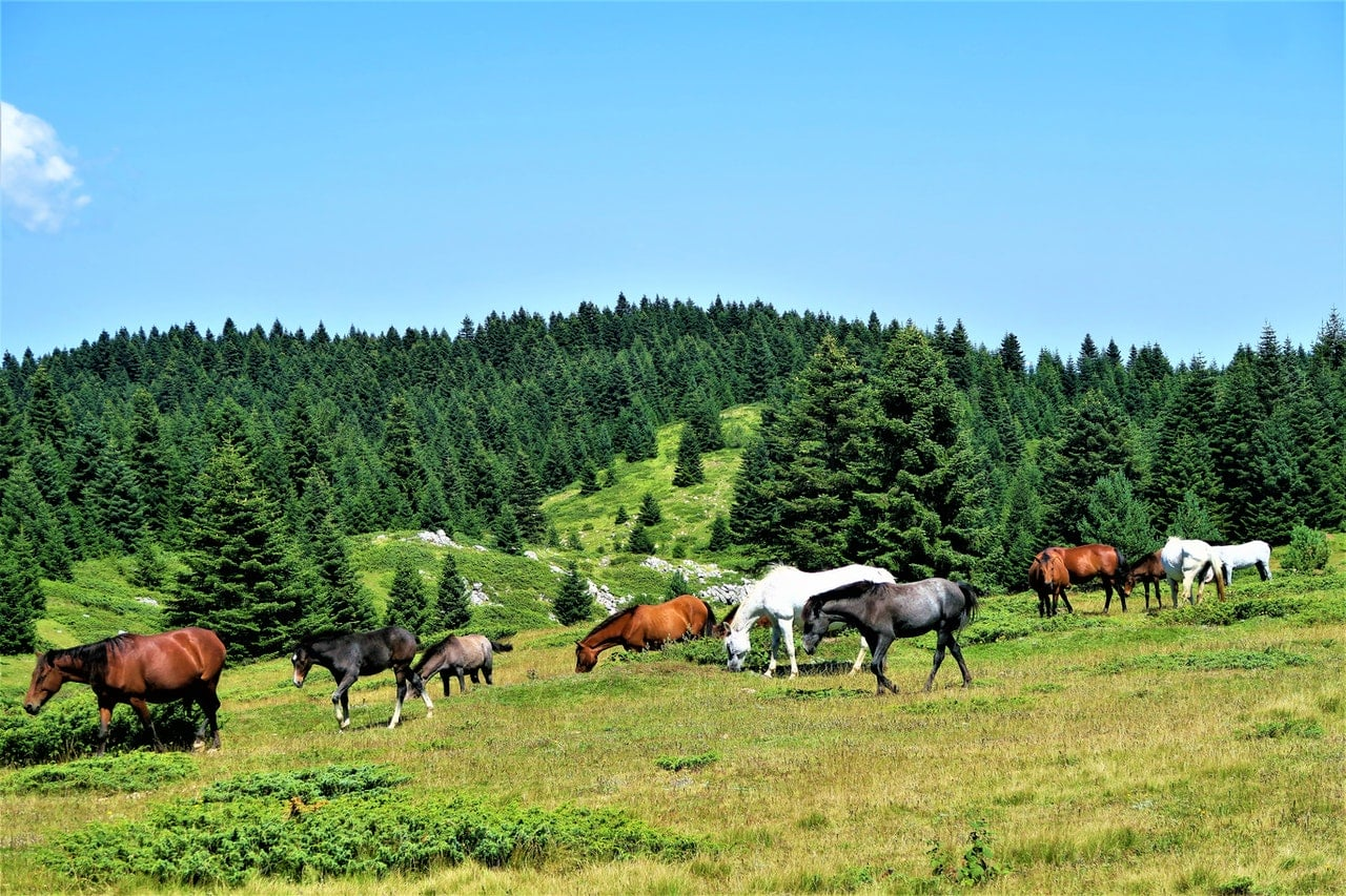 Horses slaughter returns to US