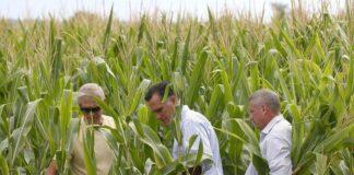 Mitt Romney and ethanol corn