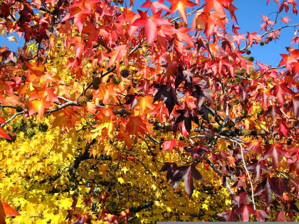 Expert: Expect 'fireworks display' of autumn colour this season
