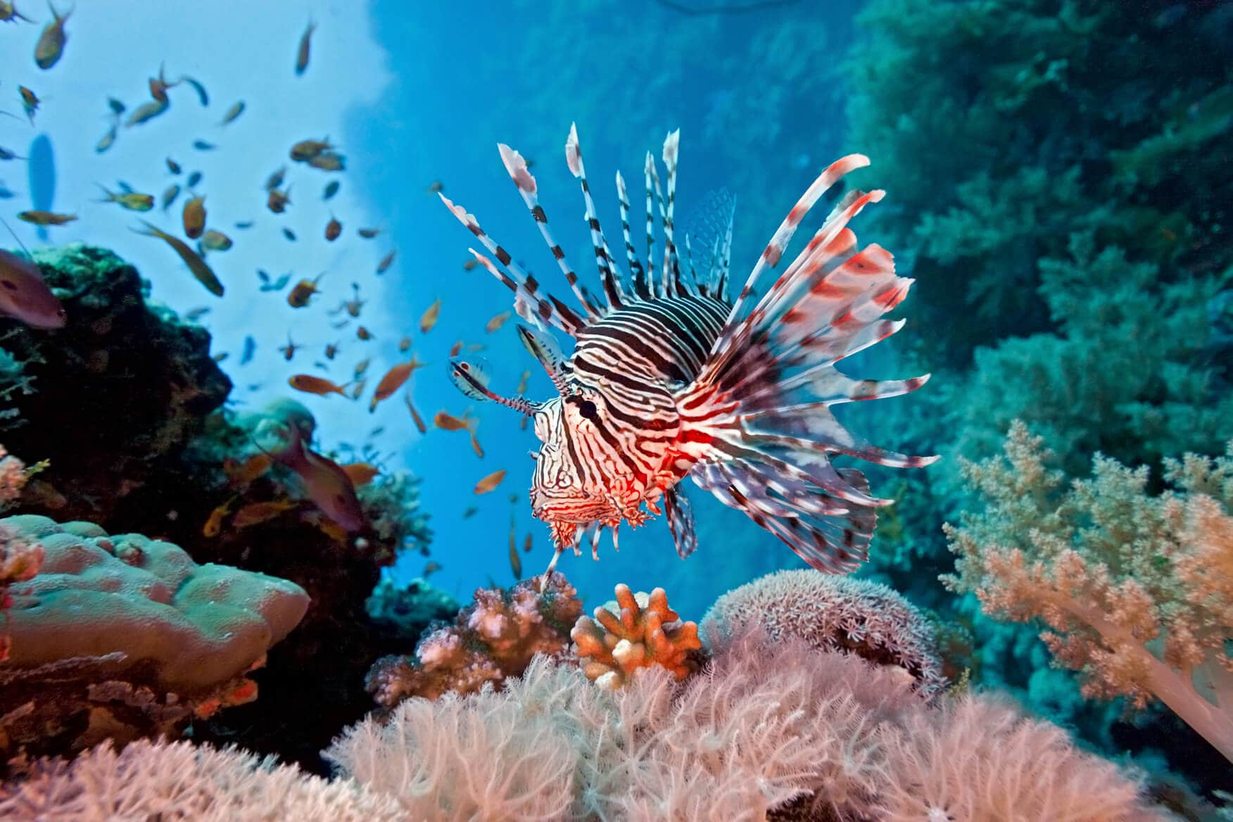 Caribbean coral collapsing the demise of coral reefs for Caribbean reef fish
