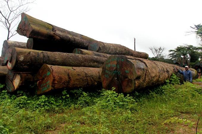 Liberia logging