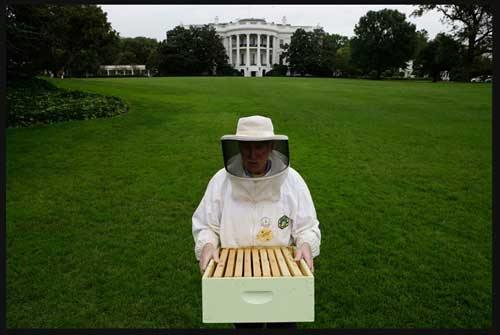 Barack Obama's bees deliver 175 pounds of honey this year