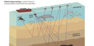 Seismic Airgun Testing