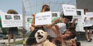 South Korean dog meat protest