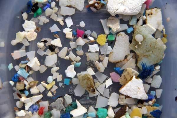 Tara Oceans Finds Plastic Among Plankton