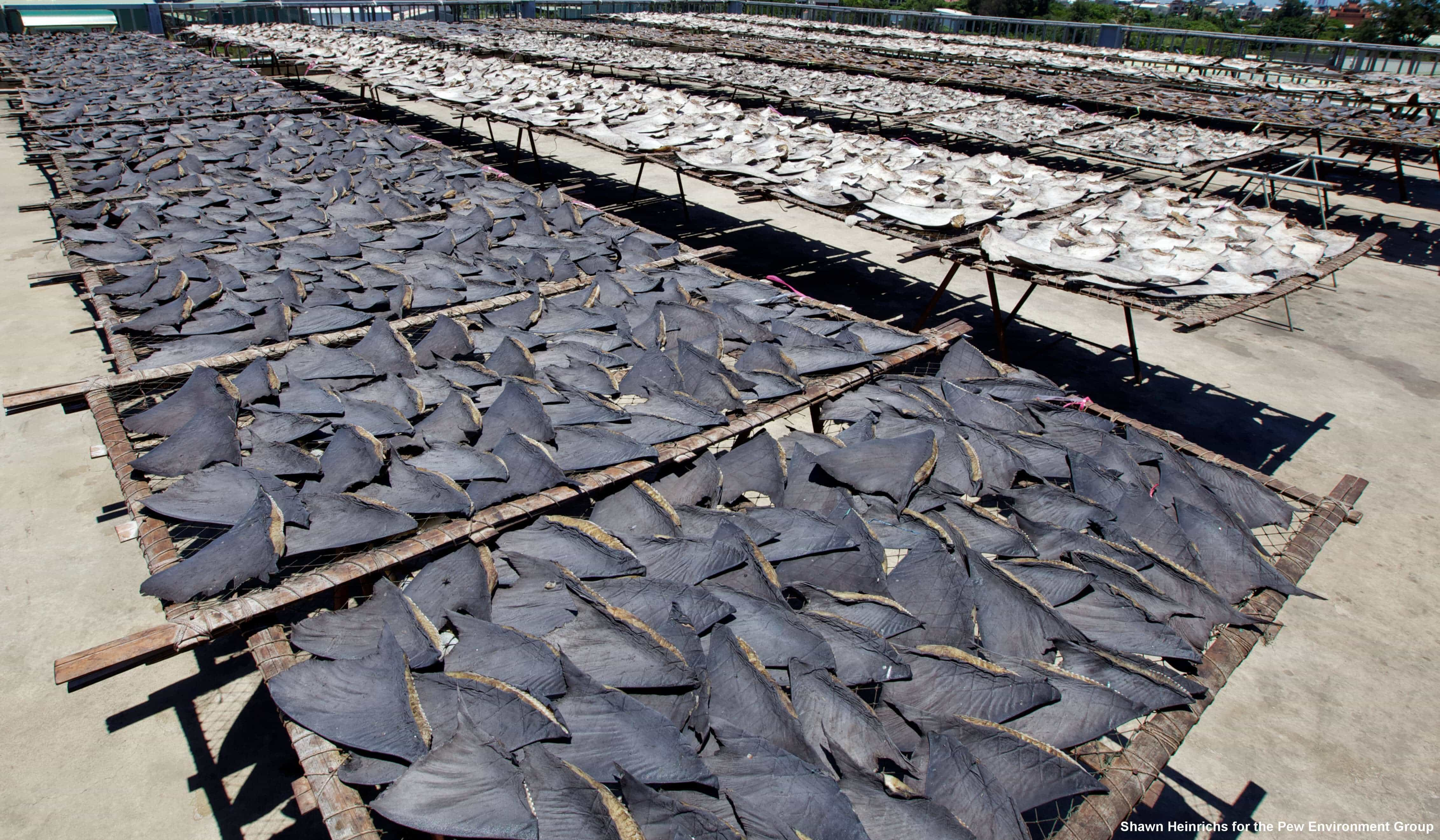 Costa Rica officially bans shark finning
