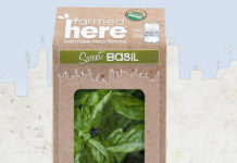 FARMEDHERE LLC SWEET BASIL vertical indoor garden