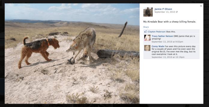 Wildlife animal abuse