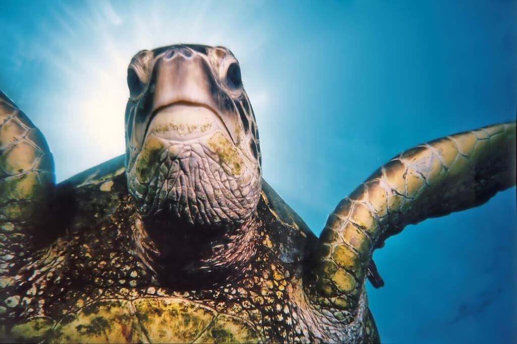 Lawsuit filed to keep sea turtles from going extinct