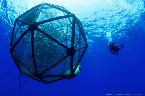 """Sustainable fish farming tool listed on TIME's """"Best Inventions"""" list"""