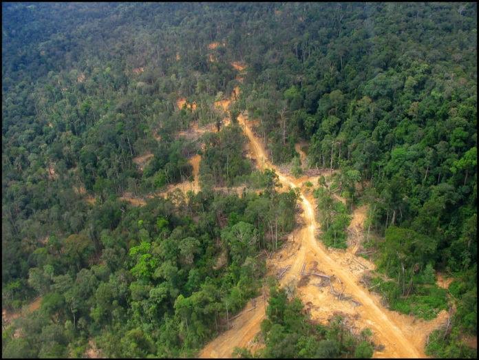 Indonesia rainforest