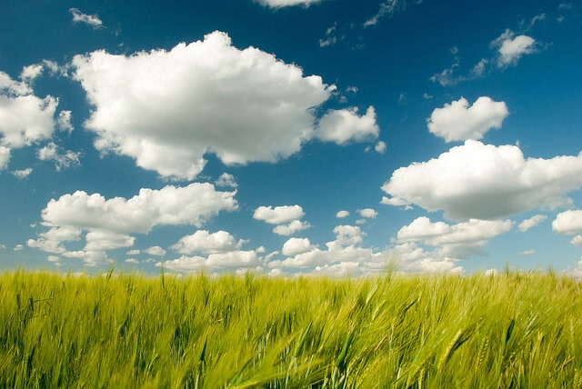 How Cloud Computing Is Helping Green Businesses