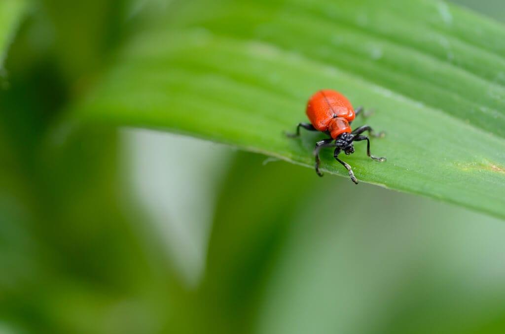 Safer Natural Pest Control