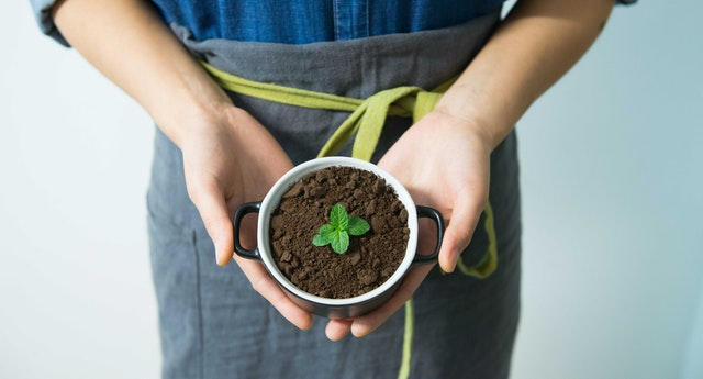 reuse old coffee grounds - garden