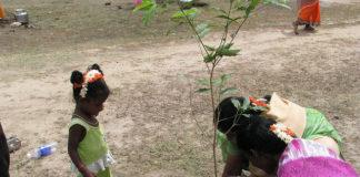 India tree planting