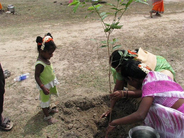 111 trees planted when girl is born in piplantri village