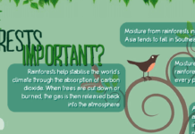 Rainforest facts banner