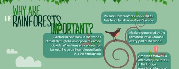 Rainforest facts banner