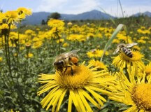 Beekeeping for Beginners, Skeptics and Scaredy-Cats