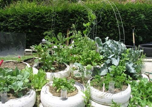 Barbados tyre garden