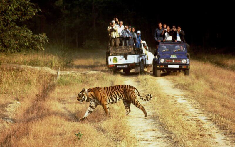 Wildlife tourism