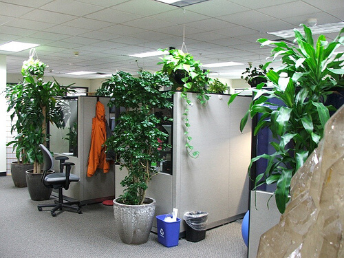 Office Plants Greener Ideal