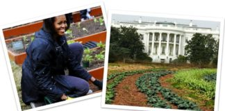Michelle Obama White House Garden