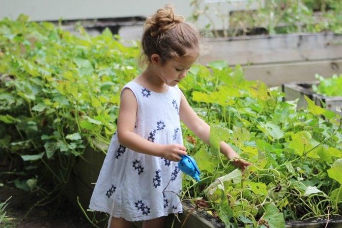 make garden eco-friendly