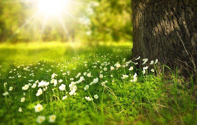 meadow - eco-friendly garden