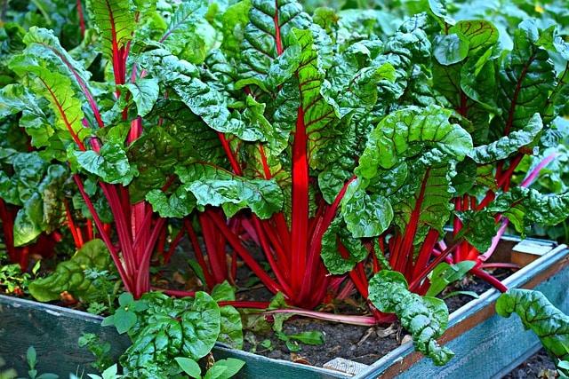 vegetables - eco-friendly garden