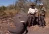 elephant hunting show