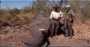 elephant hunting show