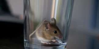 mouse in cup