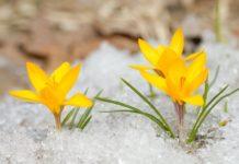 frosty flowers